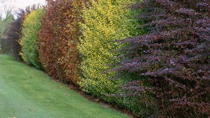 Common Types Of Hedges
